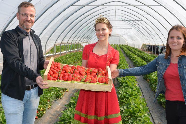 ogm-oberkirch-obstsammelstelle-auftakt-erdbeersaison
